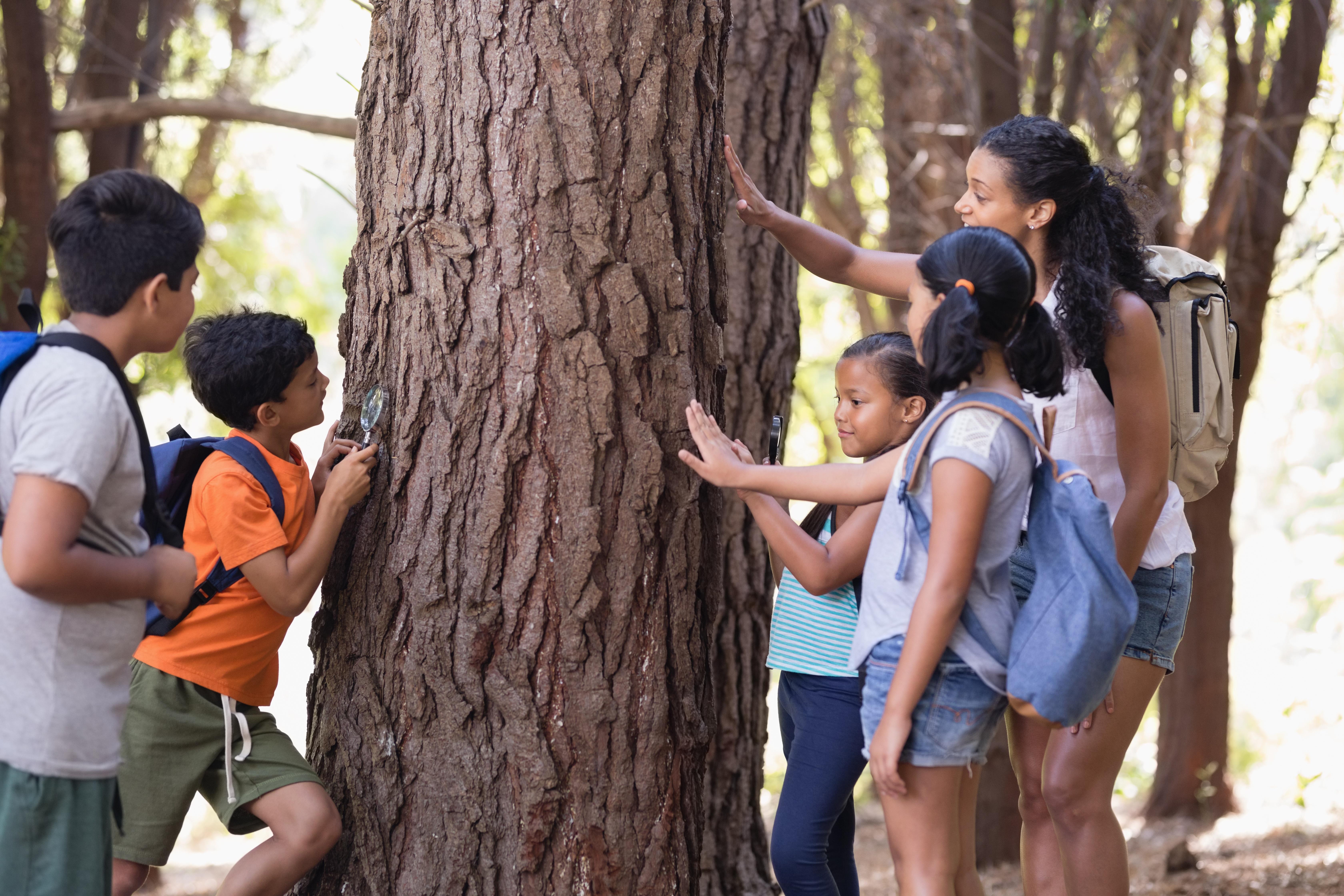 Kids looking at tree