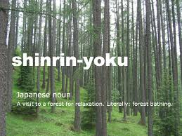 image of description of Shinrin-Yoku