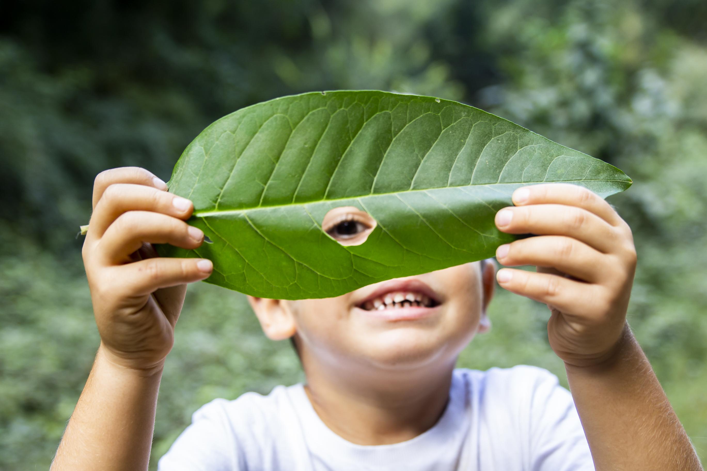 boy looking through leaf