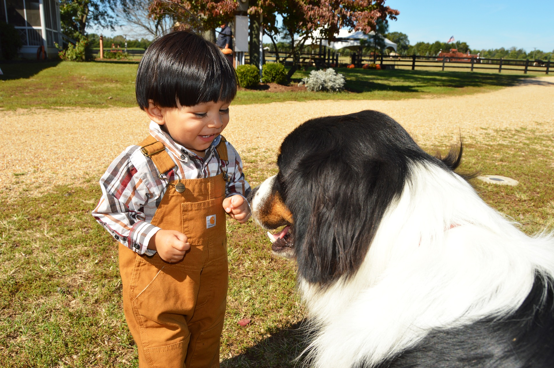 Small boy on a farm with a dog
