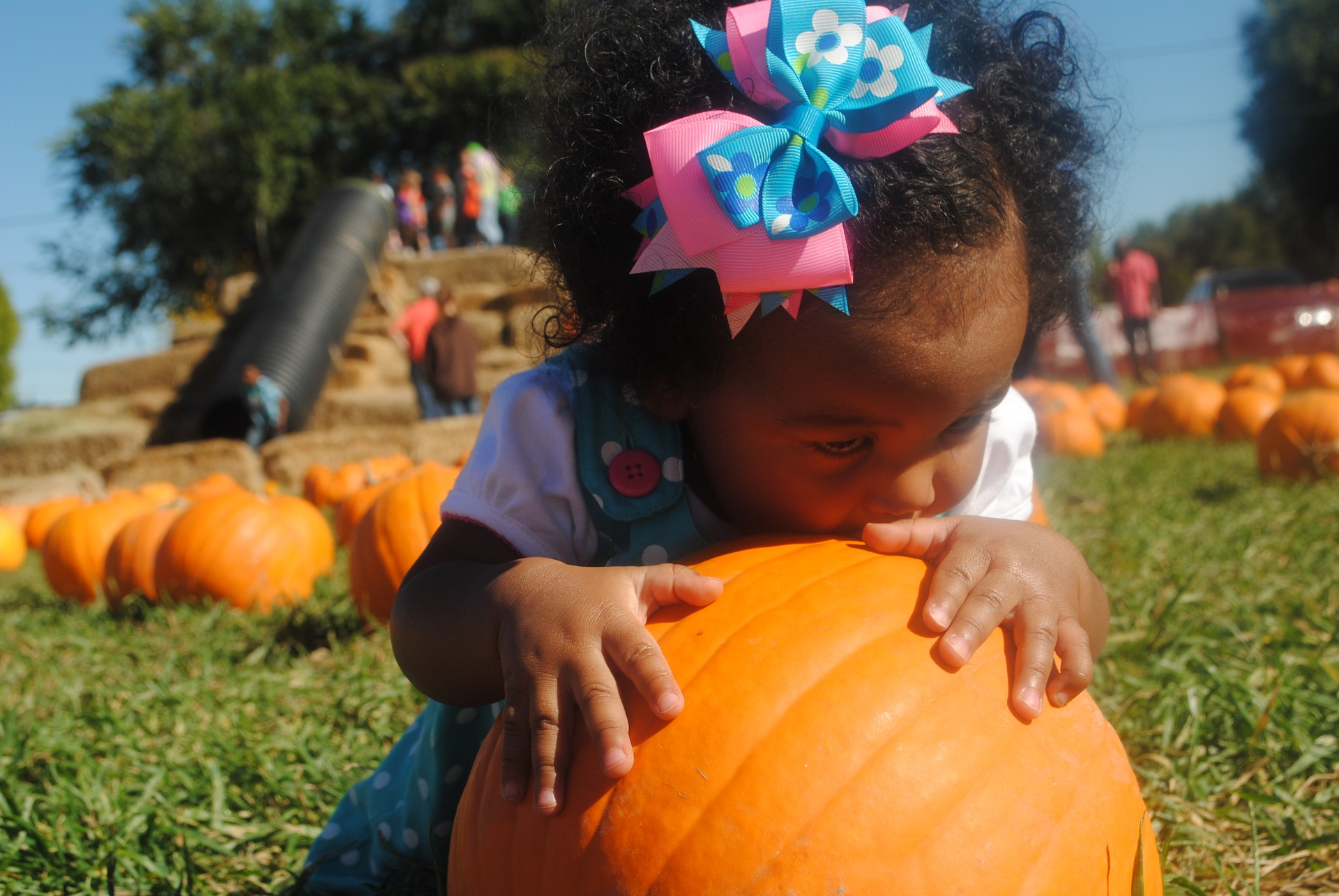 A small girl hugging a pumpkin in a field